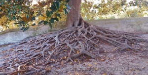 Outros/Roots