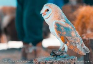 Animais/Bird