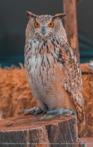 Animais/Bird II