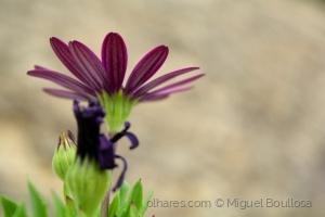 Outros/Mais uma flor