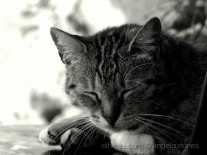 Animais/O descanso do guerreiro...