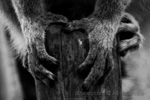 Animais/mãos