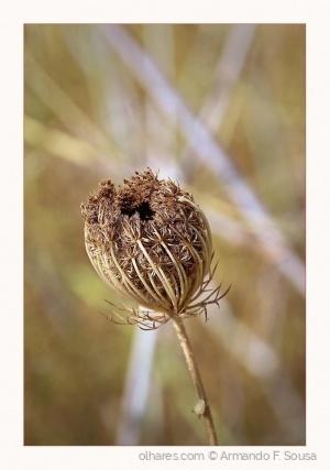 Macro/Flor seca.