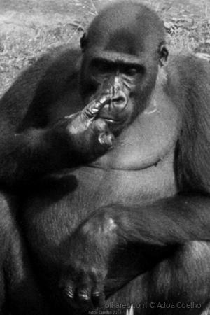 Animais/macacos no sótão