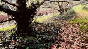 Outros/Natureza (Folhas ao chão)