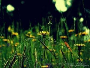 Paisagem Natural/Bliss....