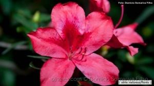 Outros/Flor vermelha
