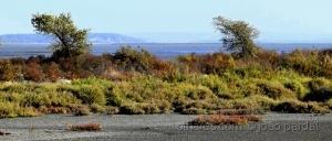/Reserva Natural do Rio Sado