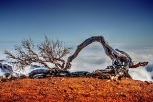 Paisagem Natural/ Entre o céu e a terra