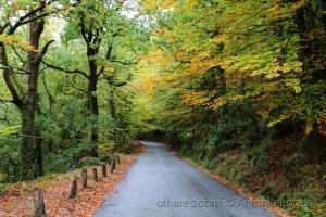 /O Outono vem a caminho...