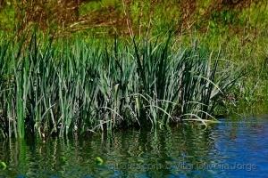 Paisagem Natural/na margem