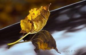 Macro/A folha caída.