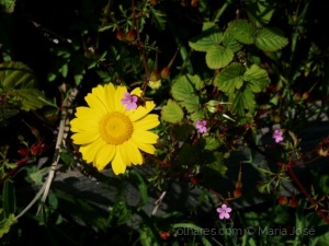/Uma florinha curiosa