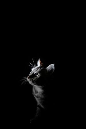 Outros/Miau