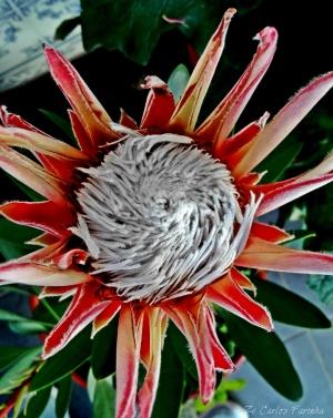/Uma estranha flor!