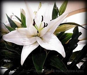 /Domingo com flores... MCris
