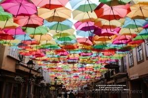 """/Photo #2264 ... """" OLHARES ... em Águeda """" (Ler)"""