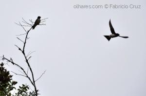 Animais/Liberdade é poder voar!