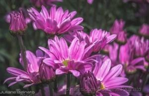 Macro/A Beleza das Flores