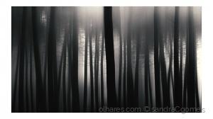 """/""""As árvores vestem-se de negro"""""""