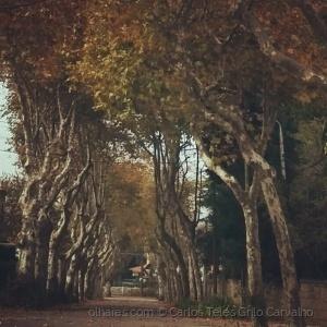 Gentes e Locais/Caminhos de Outono
