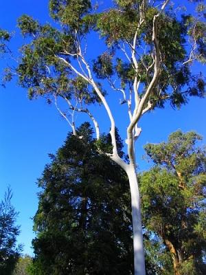 """Outros/""""Árvore branca..."""""""