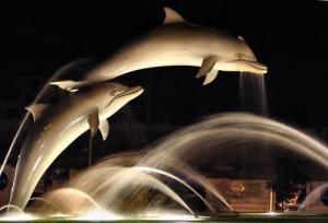 /Golfinhos II