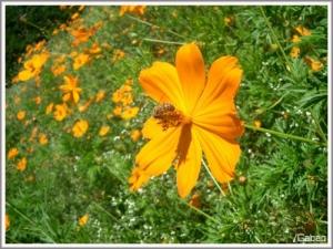 Outros/Garden