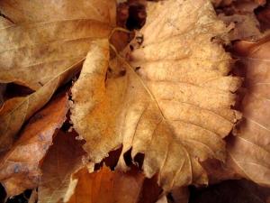 /Folhas caídas