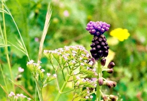 /violet pieces