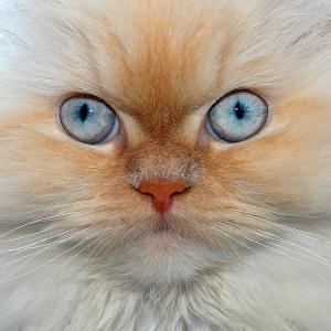 Animais/Que olhar