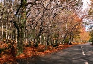 Paisagem Natural/Magia do Outono - I