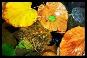 /...restos de outono