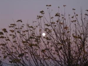 /~Lua solitária~