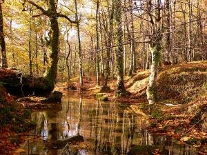 Paisagem Natural/Magia do Outono - II