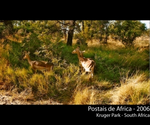 /Postais de África #8 - Kruger Park