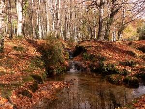 Paisagem Natural/Magia do Outono - III
