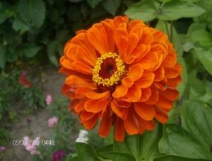 /laranja...