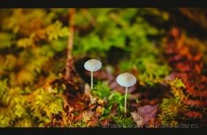 /Cogumelos Minúsculos...