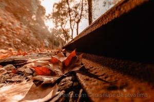 Paisagem Natural/outono em Sintra