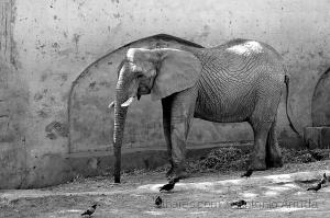 /Zoo de Lisboa DXXX