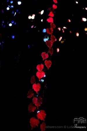 /Hearts