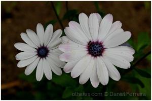 /Uma flor do meu jardim