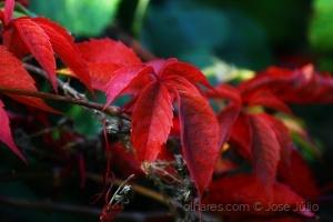 /Tons de outono