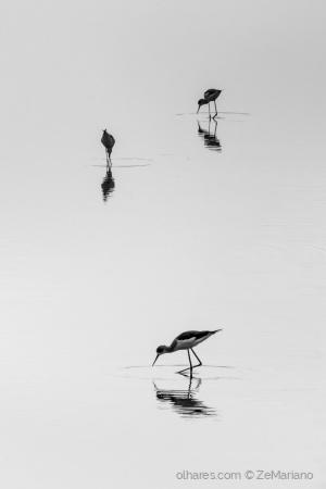 Animais/Espelhos d'água