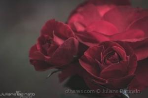 /Semana das Rosas
