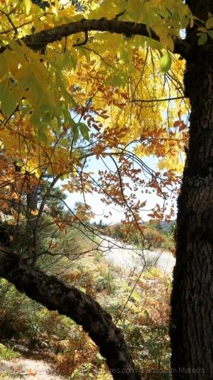 /Espreitando o outono...