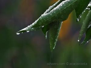 /bêbedas de chuva!