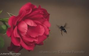 Macro/Fly