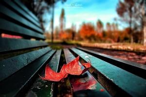 Paisagem Natural/Outono no Parque